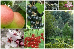 Read more about the article What is a Permaculture Food Forest Garden?
